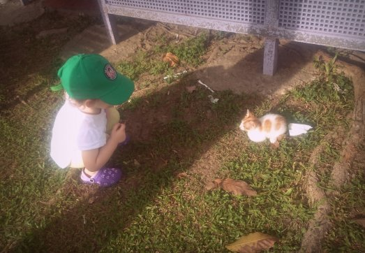 Visiting the kittens at our favourite Brunei food stalls/playground.